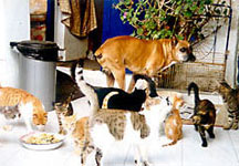 animal protection Paros Greek Island