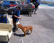 rehoming unwanted dogs from Paros